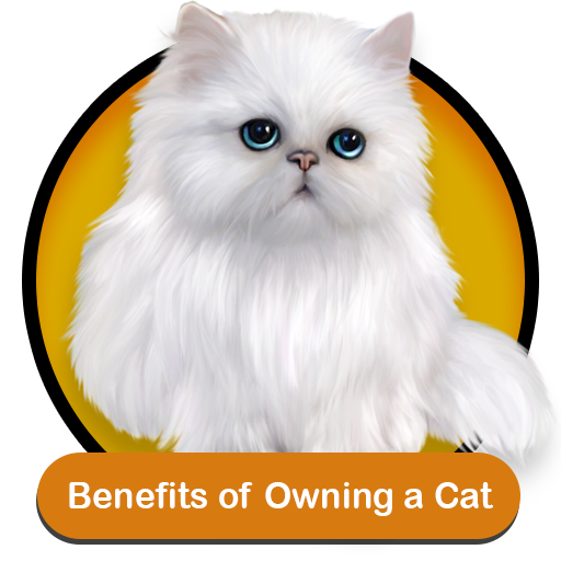 Cats For Sale Online In Chandigarh Bangalore Mumbai Delhi Pune